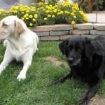 Gracie & Ally