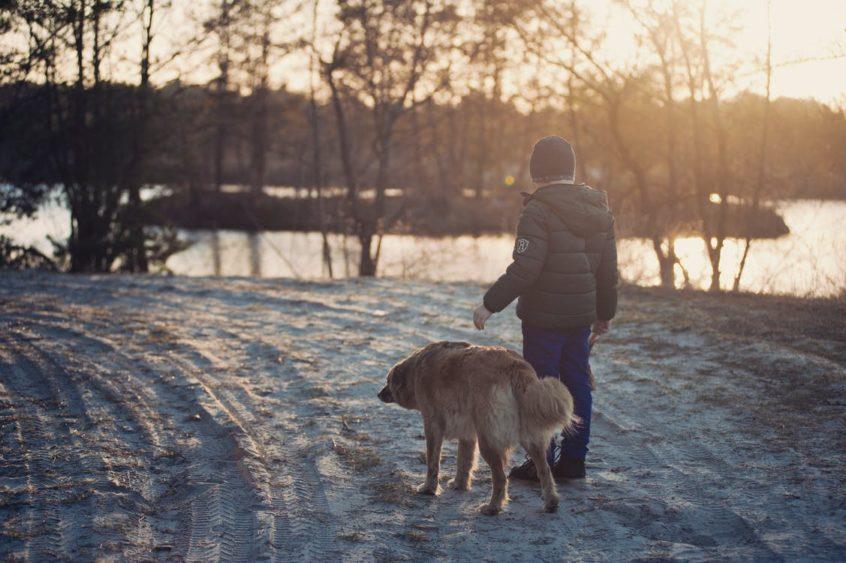 winter dog walking