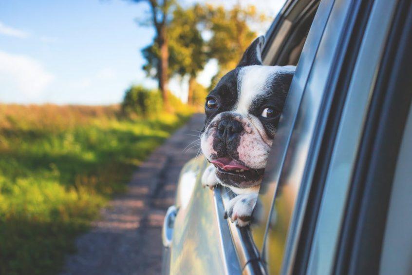 summer dog care