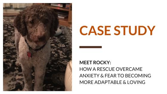 rescue rocky